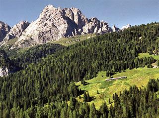 Il pascolo della Casera Lósco sovrastato dal M. Brentóni e dalla Forc. Camporosso, dove termina il sent. segn. 328