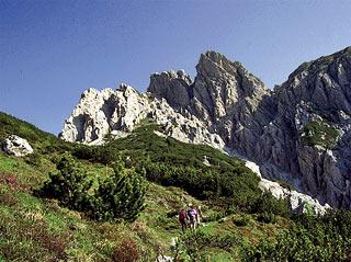 Poco a sud di Forc. Valgrande, in vista del M. Cornón)