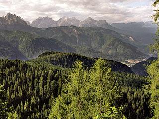 I  boschi di Tamarì e Pian de l'Òpa, in vista del fondovalle cadorino
