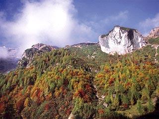 nel bosco di faggio risalendo la bassa Val dei Fràssin